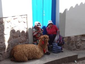 Street llamas
